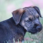 pet_photography_by_harriet_buckingham_photography (7)