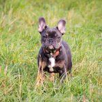 pet_photography_harriet_buckingham_photography (11)