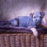 pet_photography_harriet_buckingham_photography (7)