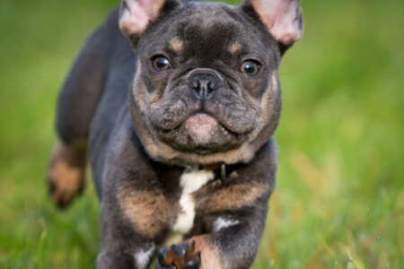pet_photography_by_harriet_buckingham_photography (18)