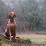 harriet_buckingham_dog_photographer-(2)