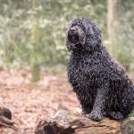 harriet_buckingham_dog_photographer-(3)