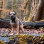 harriet_buckingham_dog_photographer-(4)