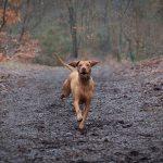 harriet_buckingham_dog_photographer-(5)