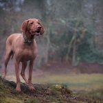 harriet_buckingham_dog_photographer-(7)